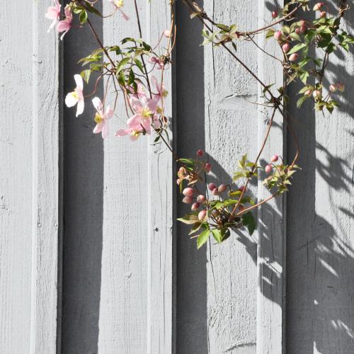 grå träfasad rosa blommor
